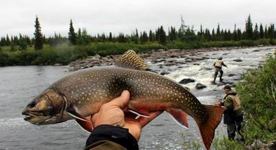 Brook Trout_Tunulic_R001