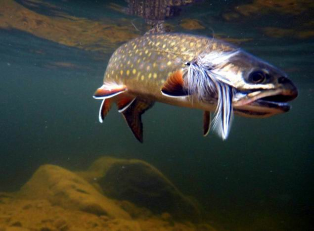 Excellent fly fishing conditions_RP001